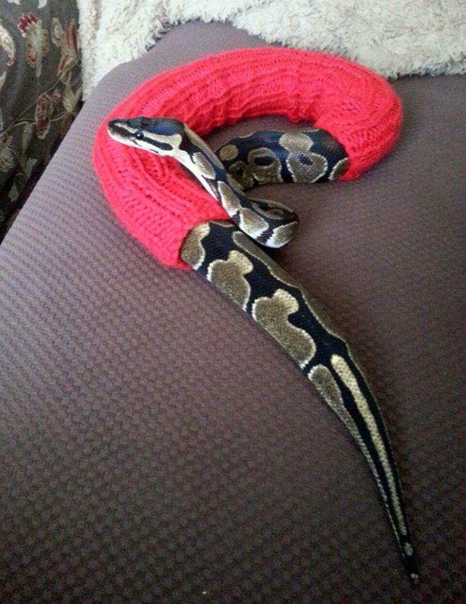 Свитер для змеи