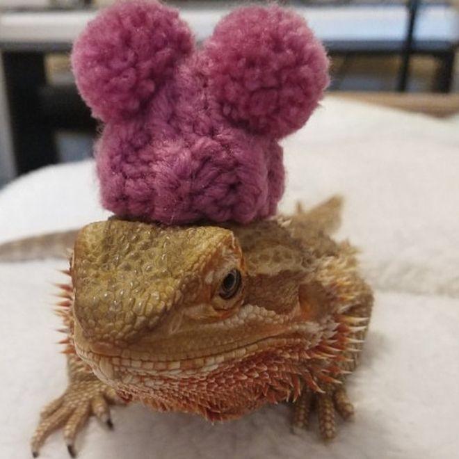 Ящерица и шапка