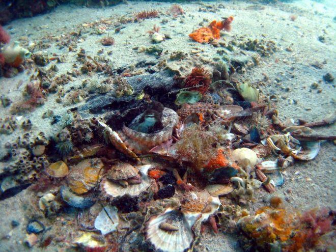 Осьминоги очень скрытные животные