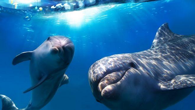 Дельфины при рождении дают своим детенышам имена