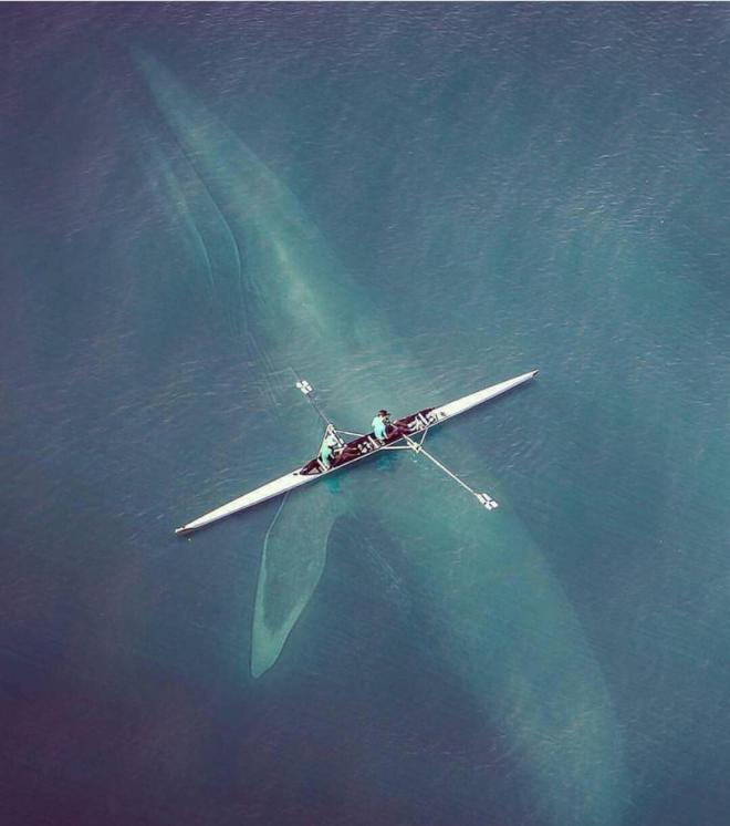 Интересно, людям, которые сидят в лодке, не страшно