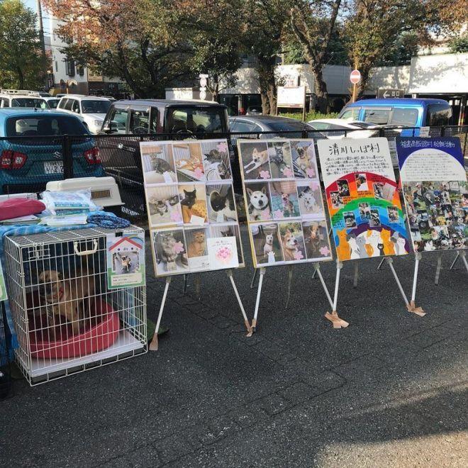В Японии нет бездомных животных