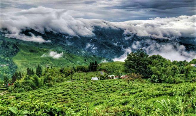 Чайная плантация Happy Valley, Дарджилинг