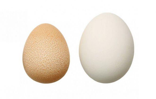 яйцо цесарки и курицы