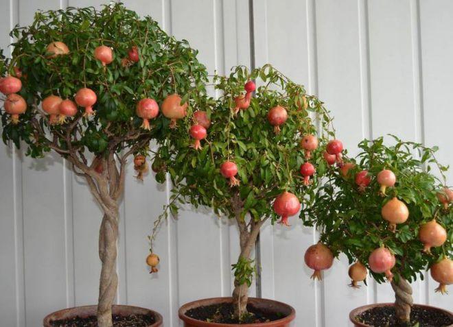 Какие растения нельзя выращивать дома по фен шуй?