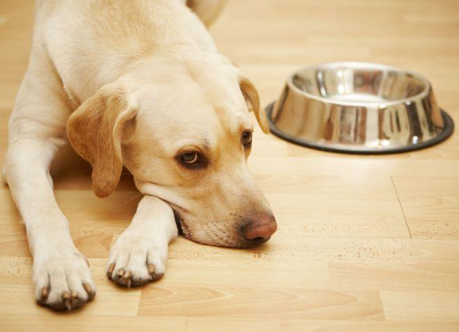 Кишечные глисты у собак