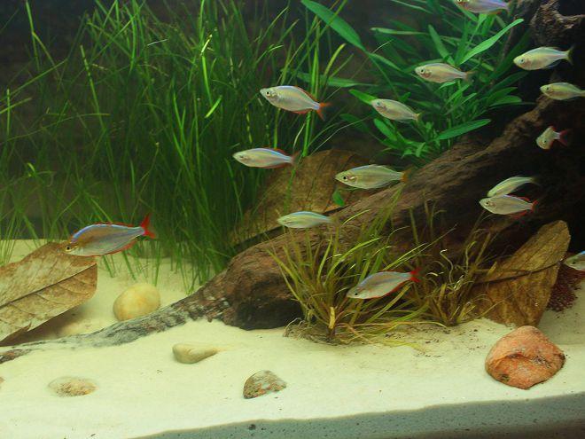 Речной песок для аквариума
