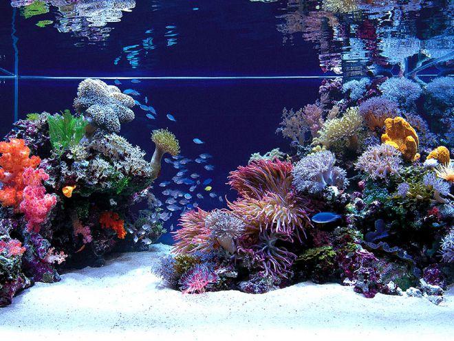 Морской песок в аквариуме