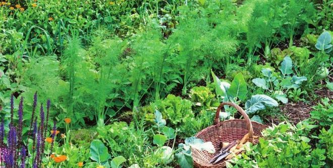 какую зелень посадить в теплице весной