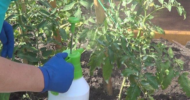 Кальциевая селитра для помидор - внекорневая подкормка