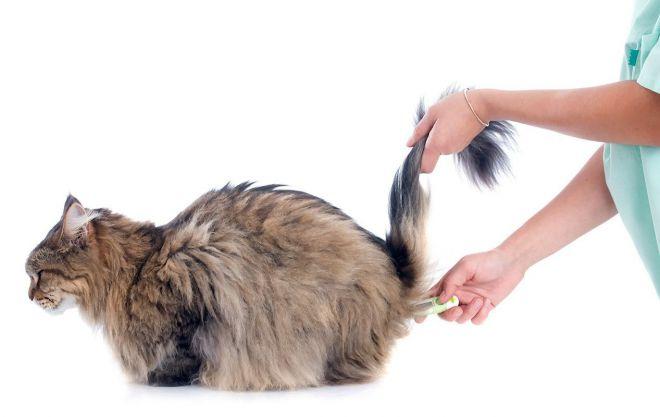 Какая температура у беременных кошек thumbnail