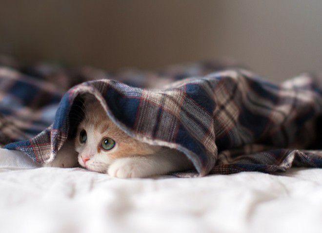 лечение запора у котенка в домашних условиях