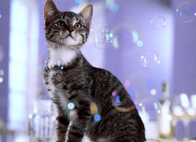 мыло от запора котенку