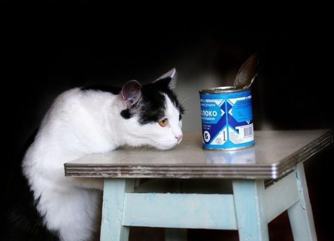 сгущенка котенку от запора