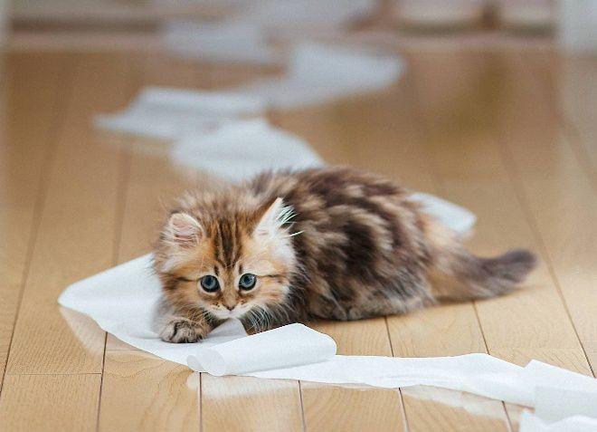 чем лечить запор у котенка