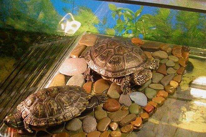 наполнитель для террариума черепахи