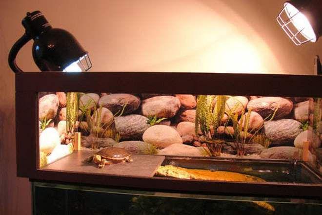 лампы для террариума для черепах