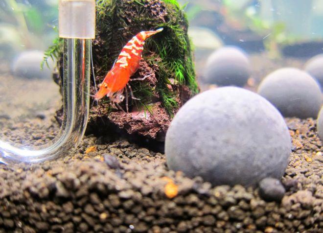 грунт для аквариумных креветок
