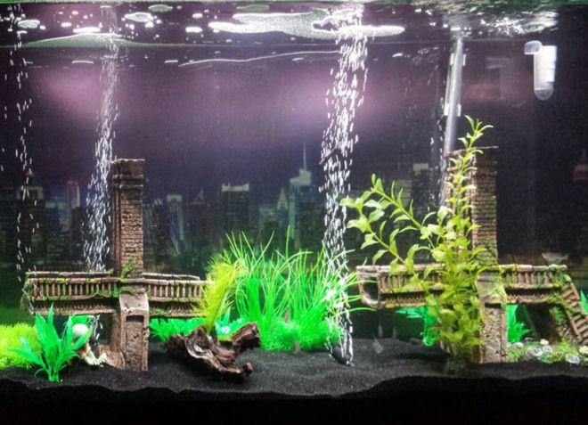 вода для раков в аквариуме