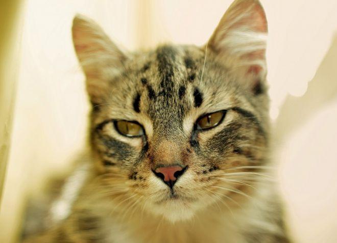 как узнать есть ли у кошки глисты