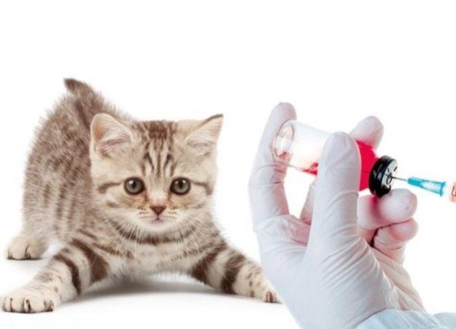 уколы от глистов для кошек