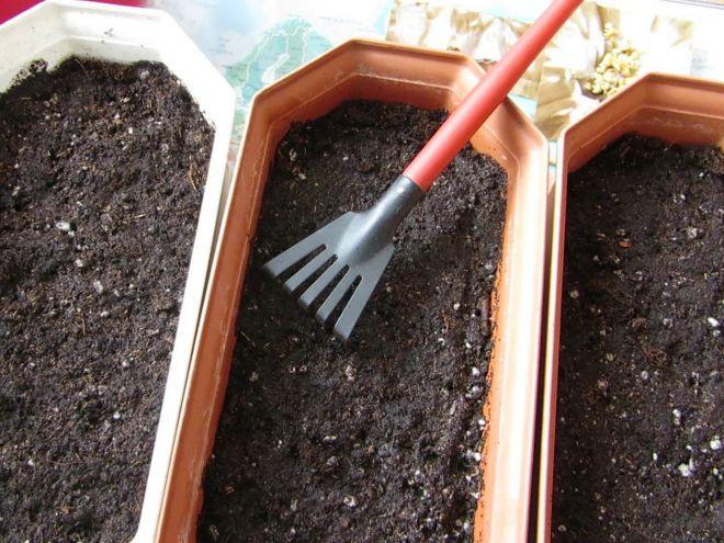 Посев перцев на рассаду в феврале