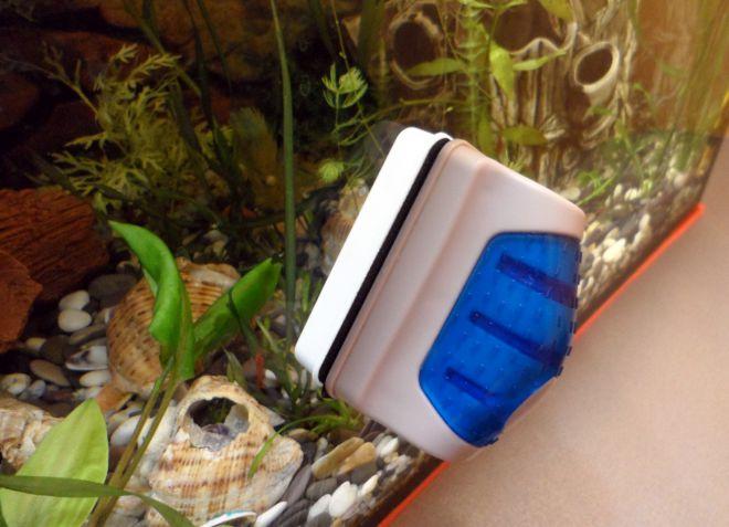 зеленая вода в аквариуме что делать
