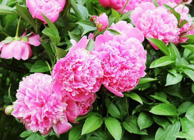Все ли цветы нужно обрезать после цветения