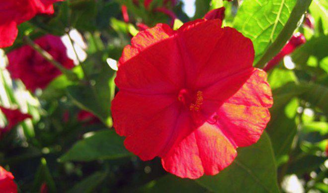 Палитра цветов что с чем сочетается
