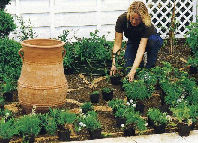 почва для садовой азалии