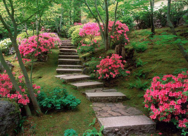 азалия садовая выращивание