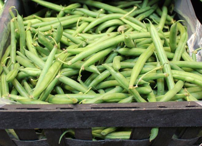 спаржевая фасоль выращивание