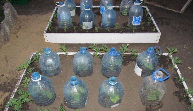 сперва устанавливается посадка огурцов в пластиковые бутылки фото космонавт