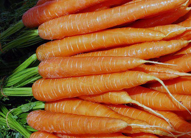 морковь которую сильно поливали фото многие гастроли