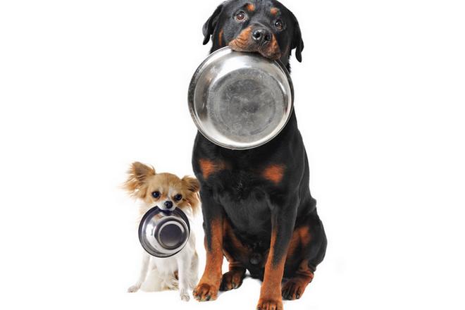 Самый вкусный корм для собак