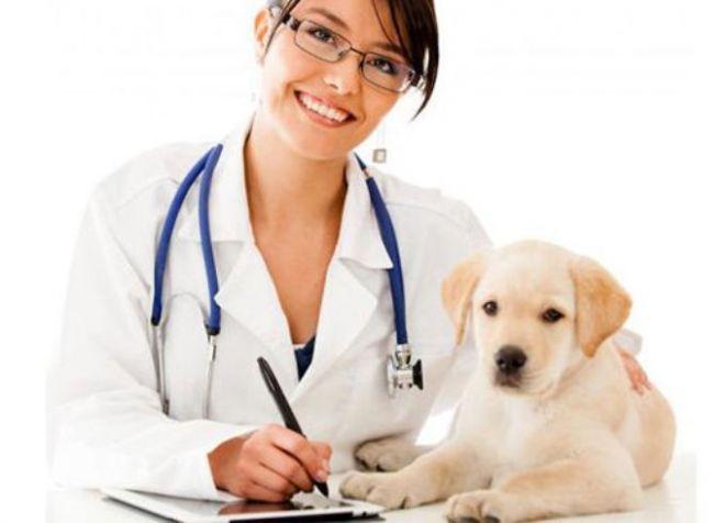 обязательные прививки как подготовить щенка