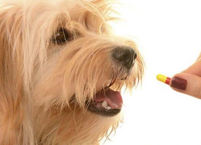 Дегельметизация щенков перед прививкой