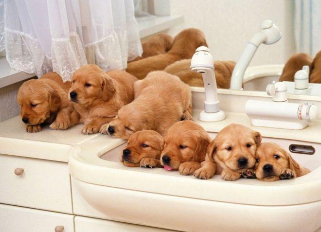 Можно ли купать щенка до прививки