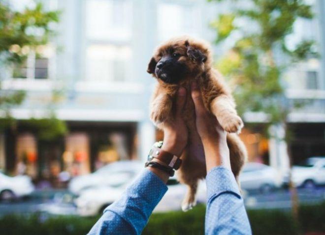 Когда можно гулять с щенком после прививки