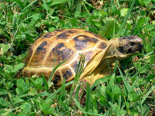 как прикольно назвать черепаху