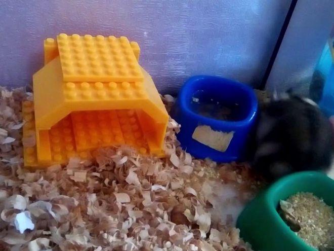 Домики из конструктора LEGO