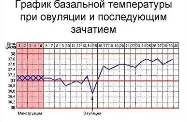 что значит базальная температура