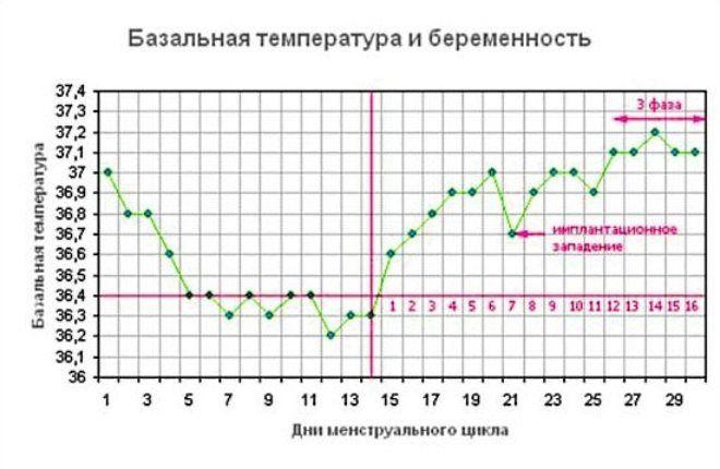 определить срок беременности
