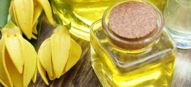 лечебные свойства масла иланг-иланг