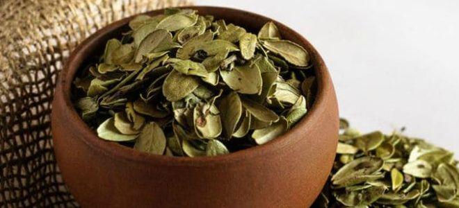 брусничные листья применение в народной медицине
