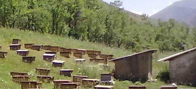 где собирают горный мед