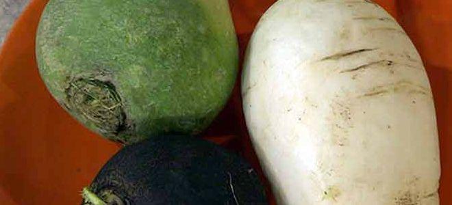 какая редька полезнее черная белая или зеленая