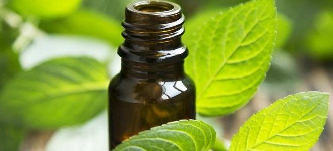 лечебные свойства масла перечной мяты
