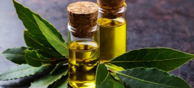 масло лаврового листа