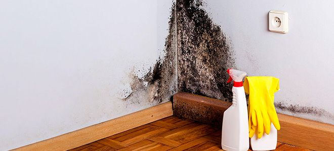 аллергия на плесень в квартире